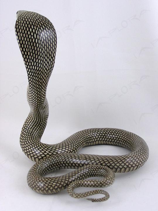 cobra Asian spitting