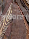 Dark Brown Cobra Snake Skin Scraps